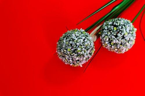 flower  red  araki red background
