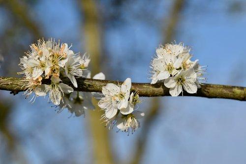 flower  flowers shrub  flowering branch