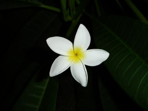 flower white yellow