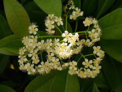 flower  sunbeam  nature