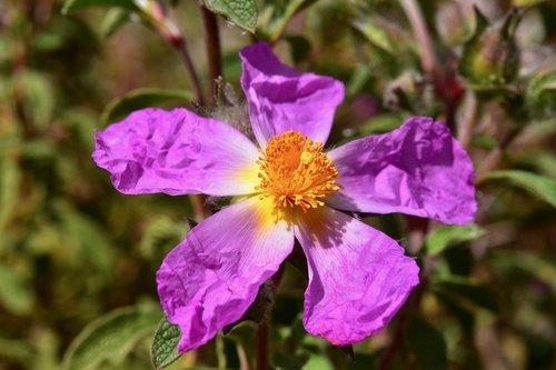 flower  flower flower stamens  pistil