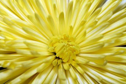flower  opened  bloom