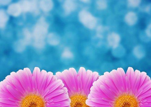flower  pink  bokeh