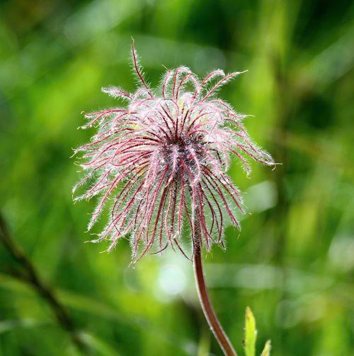 flower pink macro