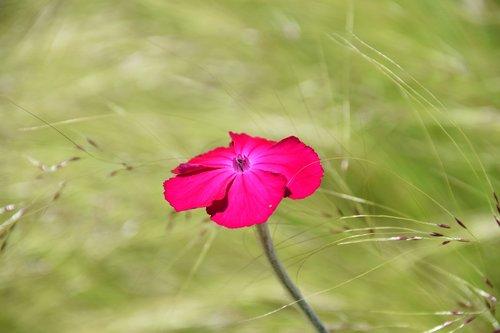 flower  pink flower  plant