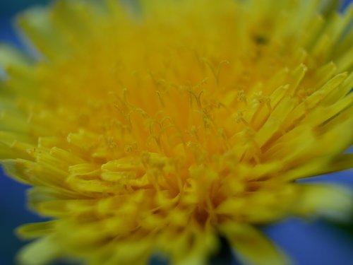flower  macro  close