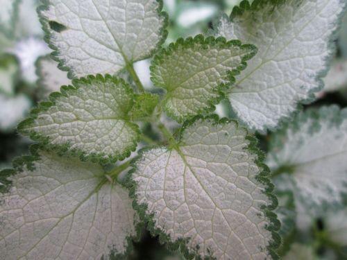 flower plant closeup