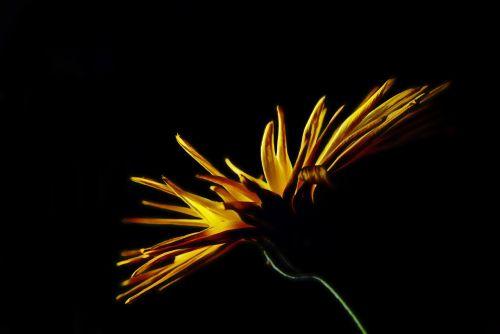 flower yellow light