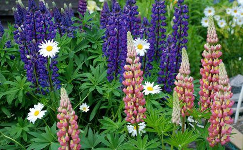 flower flowerbed garden