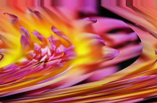 flower flow purple
