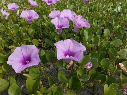 flower leaf nature