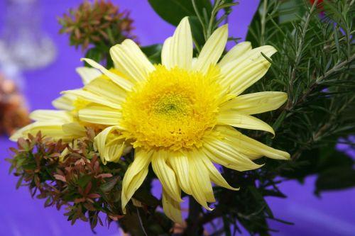 flower mum yellow