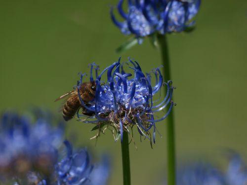 flower bee blossom