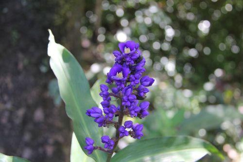flower purple flower hawaiian flower