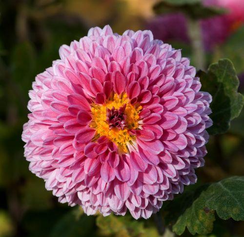 flower bloom blossom