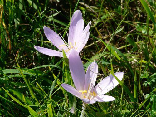 blossom bloom light purple