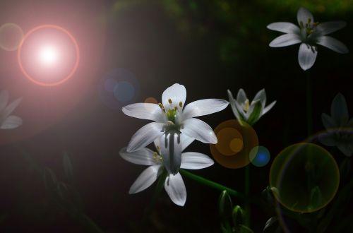 flower white blossom
