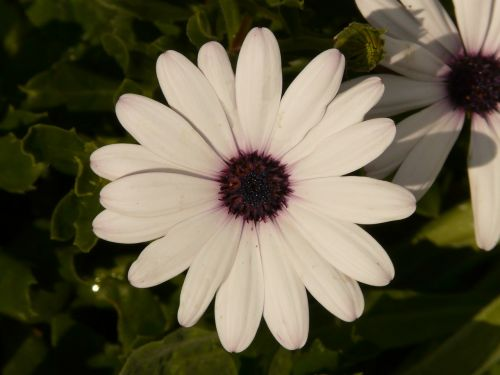 Whiteflowerflowergardenpetals free photo from needpix flowernatureplantblossombloomwhitefree photosfree mightylinksfo