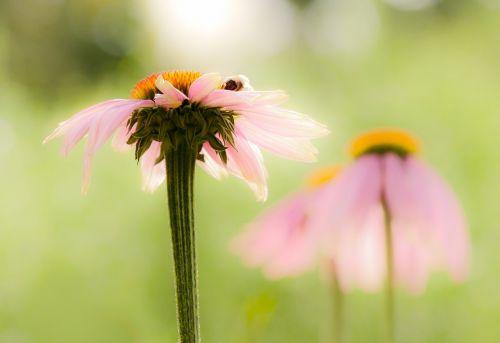 flower meadow summer