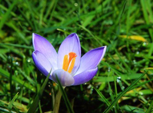 flower blossom bloom