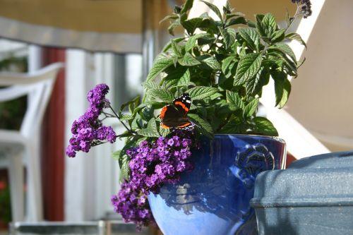flower purple lila