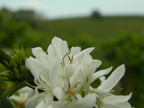 flower plant landscape
