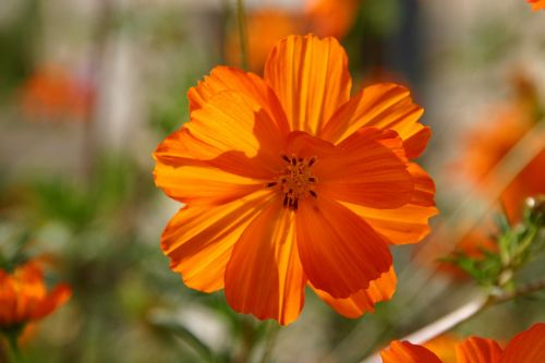 flower orange happy