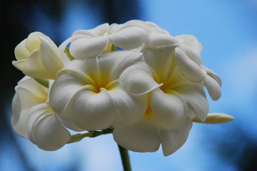flower thailand koh yao