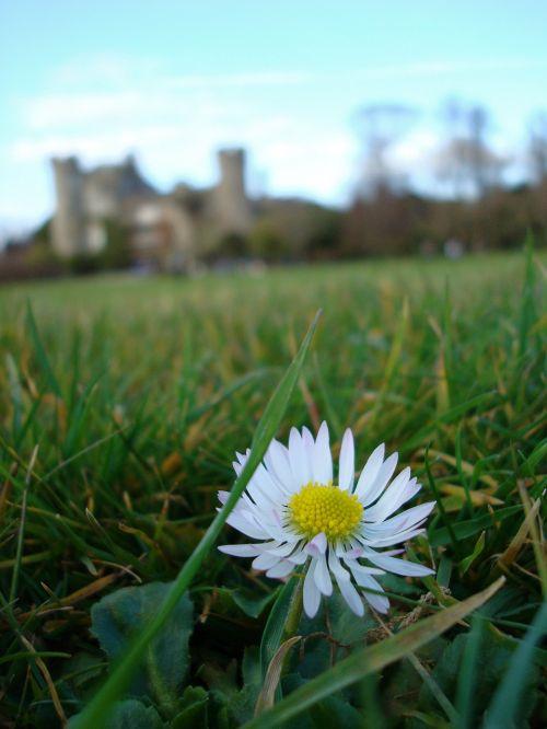 flower ireland castle