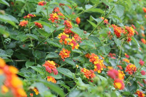 flower green bits