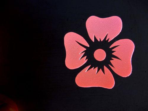 gėlė,kontūras,rožinis,kontūrai,siluetas