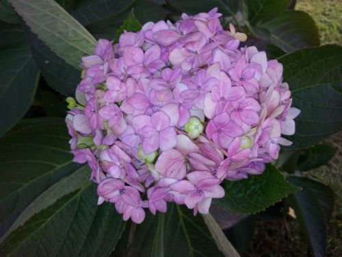 flower plant clusters