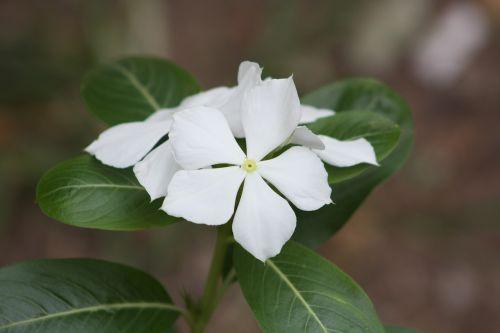 flower garden botanist