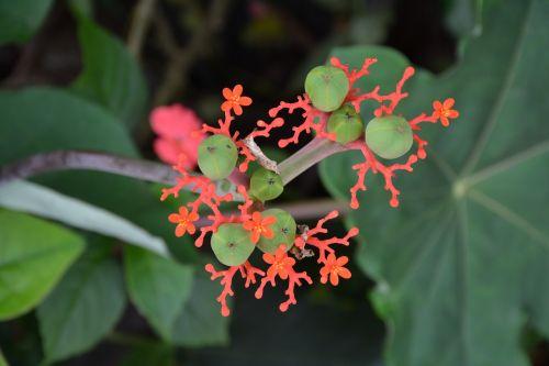 flower exotic green