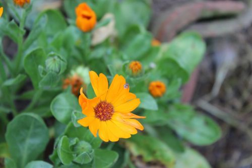flower leech landscape