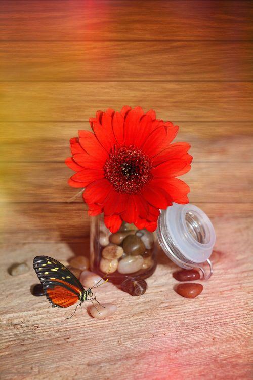 flower gerbera blossom