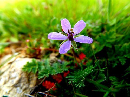 flower mov petals
