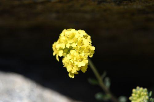 flower yellow spring flower
