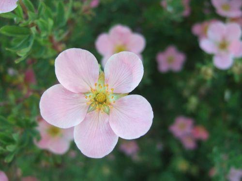 flower pink summer