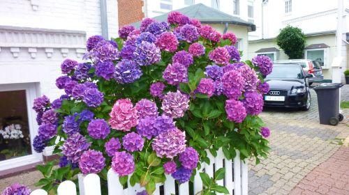 flower summer sylt