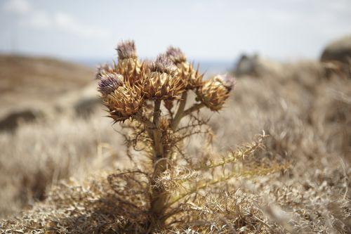 flower steppe golden