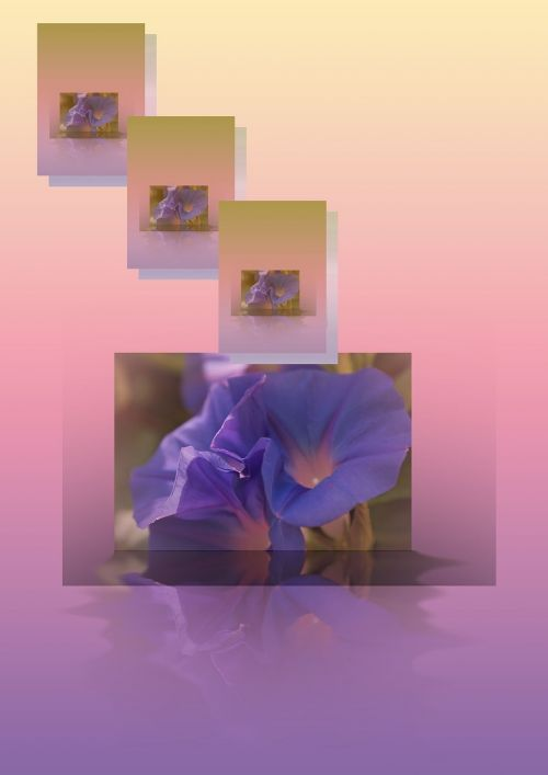 flower color assembly