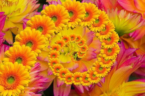 flower flowers creation