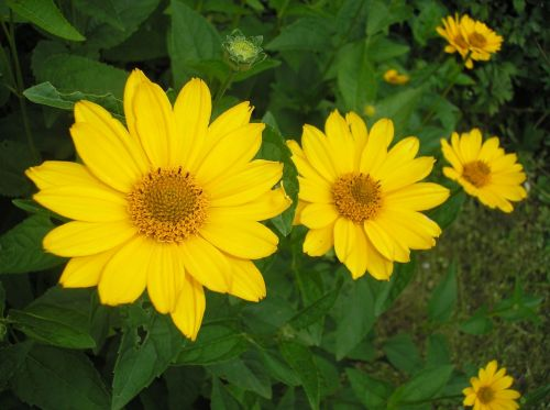 flower blooms at yellow