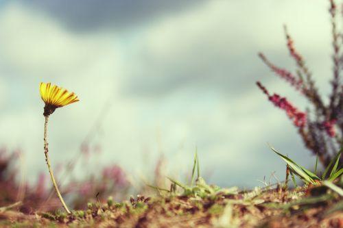 flower setback victor
