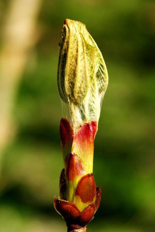 blossom bloom bud