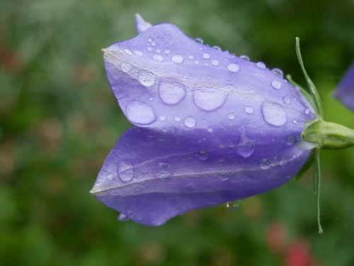 flower forever nature