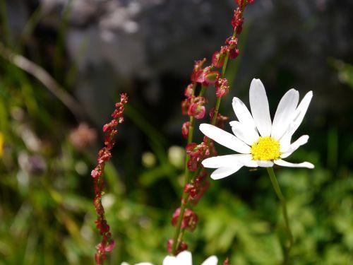 flower meadow blossom