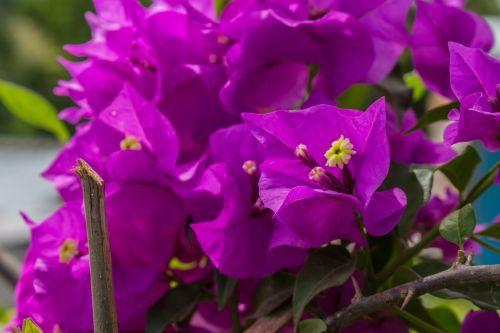 flower color nature