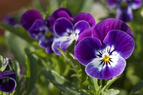 flower close-up purple